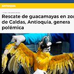 rescate de guacamayas