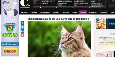 El marcapasos que le dio una nueva vida al gato Romeo