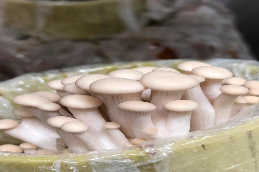 Laboratorio de hongos CES